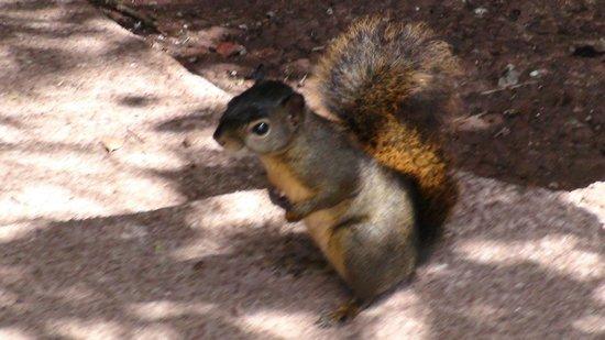 Poas Volcano: schattig eekhoorntje