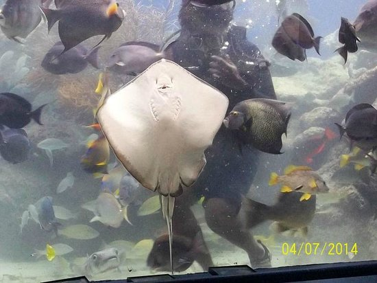 Coral World Ocean Park : feeding time in the coral reef