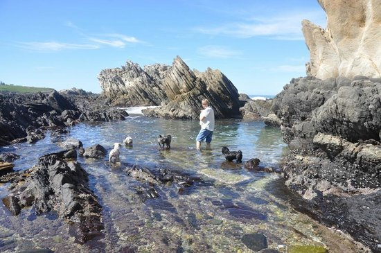 Sea Notes : Robyn with dogs at the natural pools