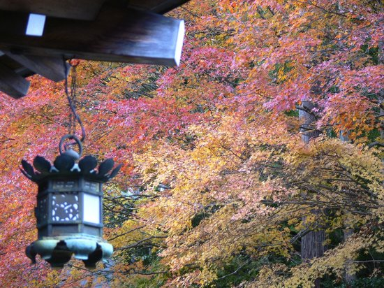 Koyasan Onsen Fukuchi-in: Great fall colors