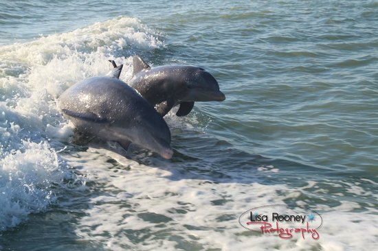 Sea Shell Boat Tours: Dolphins