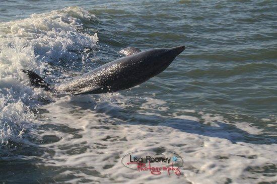 Sea Shell Boat Tours: Dolphin Flip