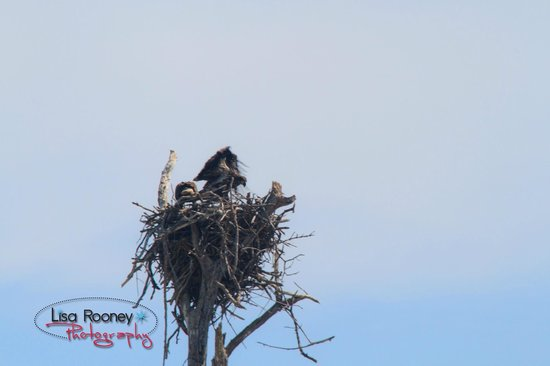 Sea Shell Boat Tours: Eagle and Eaglette