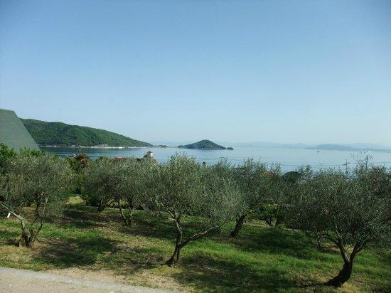 Shodojima Olive Park : オリーブの木と瀬戸内海
