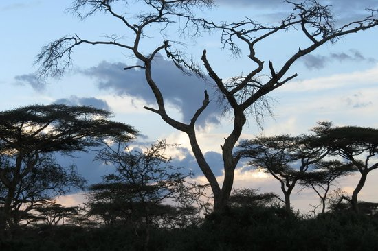 Serengeti Savannah Camps: Veiw from the tent front