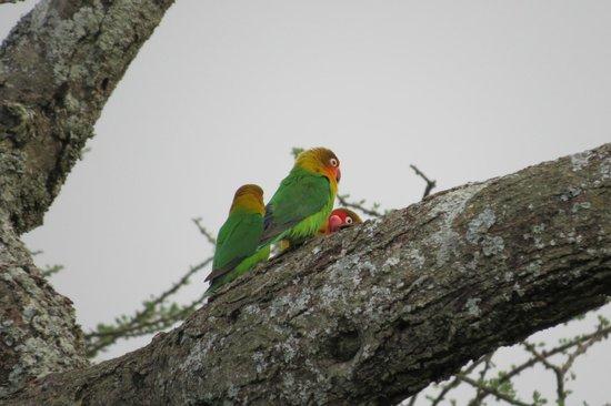 Serengeti Savannah Camps : Morning view -- same tree
