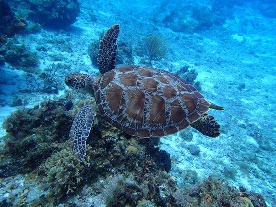 Tiger's Adventures : LOVE the sea turtes