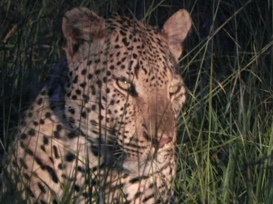 Shindzela Tented Camp : The leopard we followed for more than 1 hour