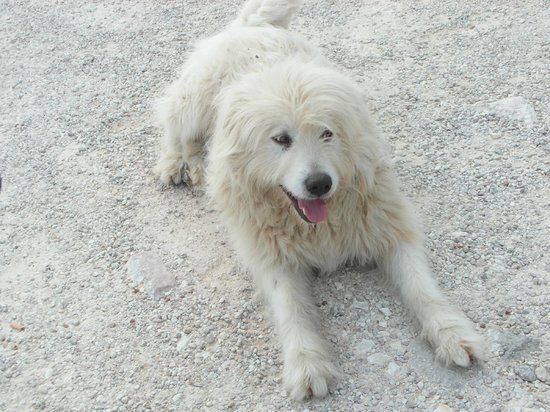 Casale Tancia: One of the Agricturismo's friendly sheep dogs.