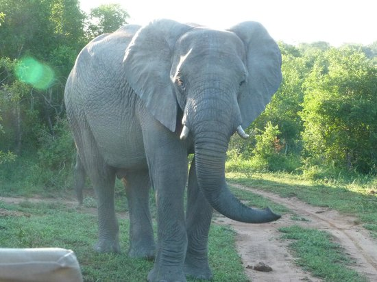 Mkuze Falls Game Lodge: Not amused!
