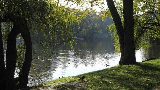 Łazienki-Park (Park der Bäder): Wildfowl lake