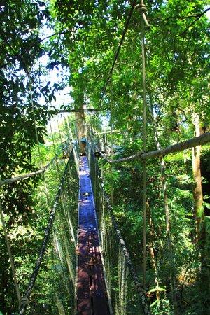 Mulu World Heritage Area Accommodation : Canopy walk