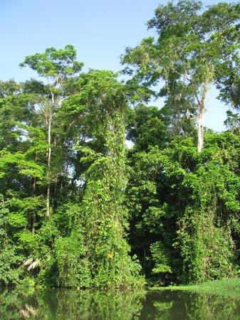 Parque Nacional Tortuguero: TORTUGUERO