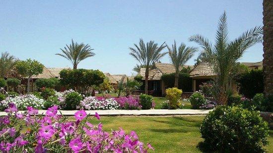 Panorama Bungalows Resort El Gouna : Gardens
