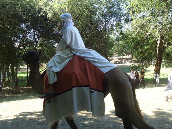 pata de camelo rua 69 santarem