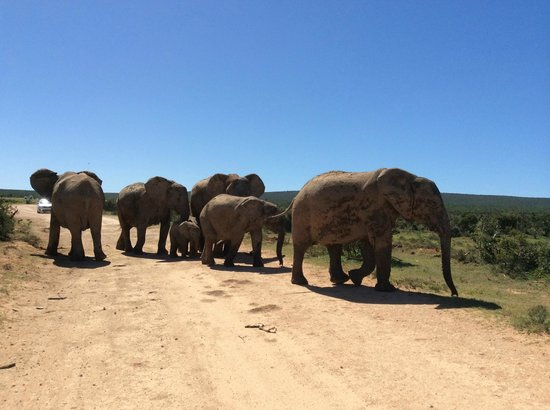 Schotia Safaris Private Game Reserve: Addo Elephant Park