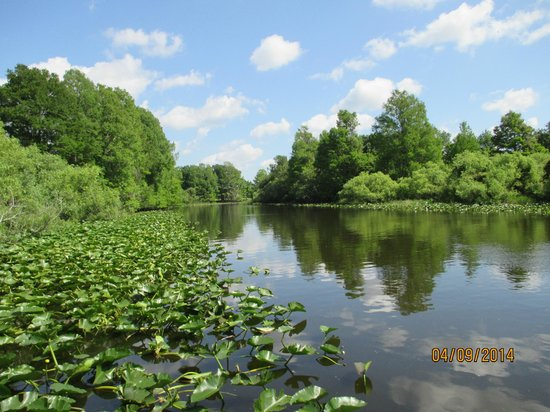 Alligator Cove Airboat Nature Tours: Beautiful scenery.