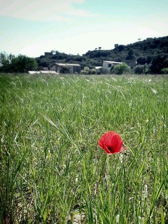 Alen d'Aragon: Tucked into a hill and surrounded by fields & olive trees