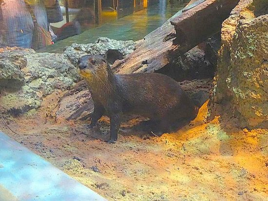 Greensboro Science Center: otter