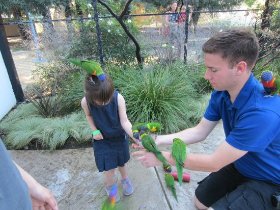 Turtle Bay Exploration Park: My niece enjoying feeding the parrots at the park