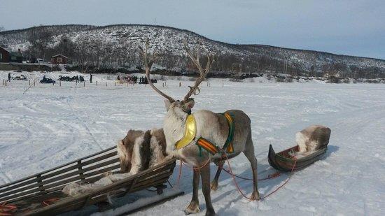 Kautokeino, Norwegia: Funny