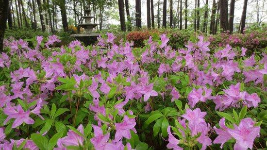 WRAL Azalea Garden