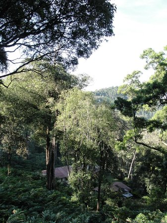 The Tall Trees Munnar: view from our room
