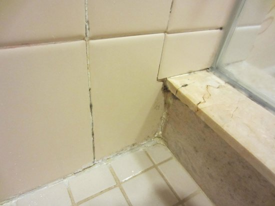 Little Rock Marriott : Mold In Shower