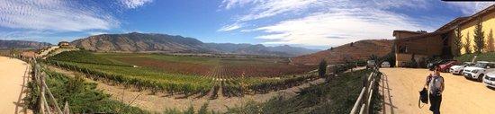 Vina Santa Cruz: Una panorámica de los viñedos
