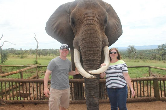 African Spirit Game Lodge: Elephant Interaction