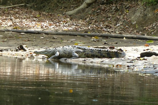 Canoa Aventura: Crocodile