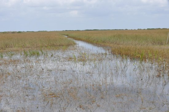 Fort Lauderdale Airboat Adventure: A full speed through the Everglades