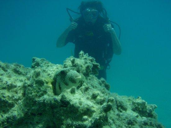 Coral Beach Resort: Diving