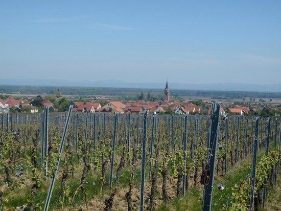 La Cour du Bailli Residence Hoteliere : Bergheim depuis le vignoble