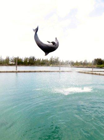Unexso : Dolphin Flip