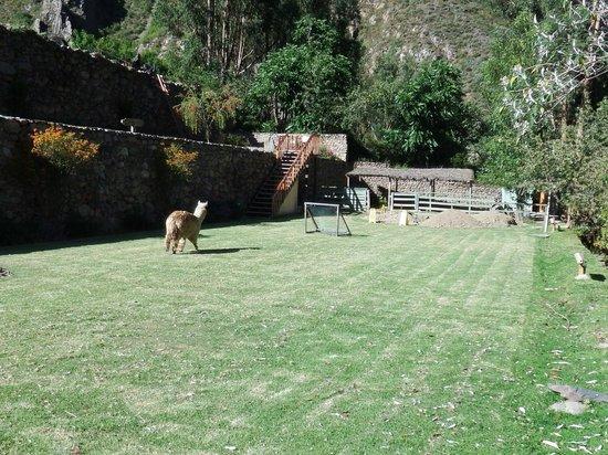 Pakaritampu Hotel: Resident lawnmower