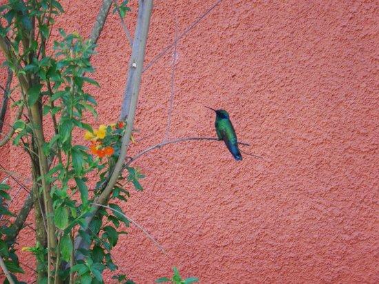 Pakaritampu Hotel : Hummingbird