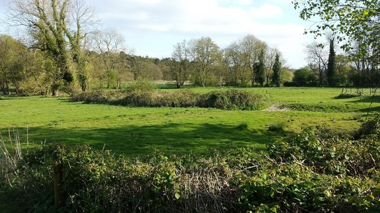 The Swan at Hilborough: view from the accomodation