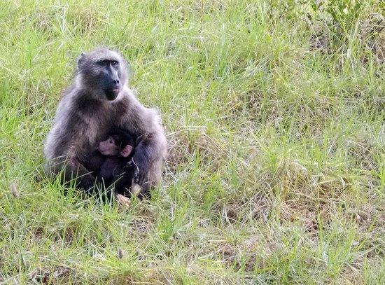 Baz Bus - Day Tours: Monkey on the street