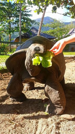 Constance Ephelia : Giant tortoises are fed at 4pm daily