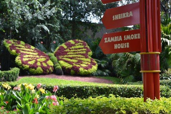 The Kangaroos In Bush Gardens Picture Of Busch Gardens Tampa Tampa Tripadvisor