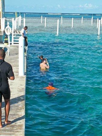 Marinarium Excursions - Reef Explorer: area to snorkel with the nurse sharks
