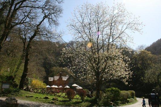 Watersmeet National Trust Tea Rooms: Sunny spring day at Watersmeet