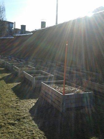 Hotel Katajanokka: Тюремный огород