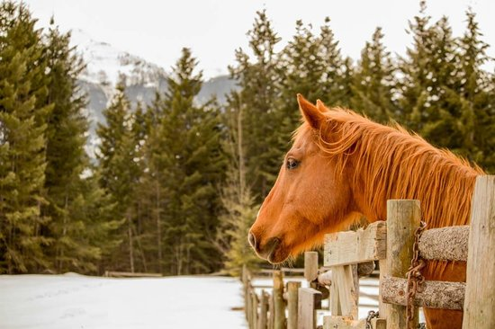 Mount 7 Lodges: Horses in the mountains