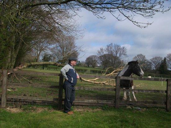 St George's Court : Farm Meadow