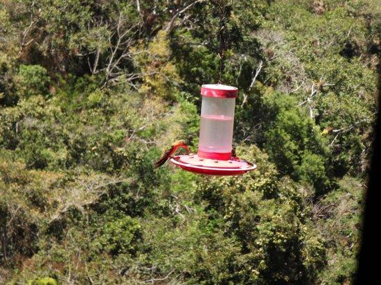 Vallarta Botanical Gardens : Hummingbirds off the restaurant terrace