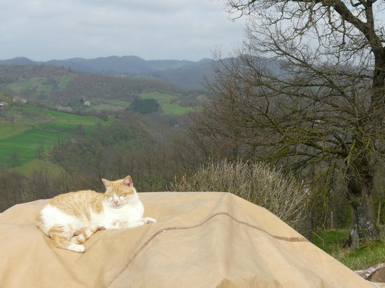 GranNoce Bed and Breakfast : Panorama e Gatto