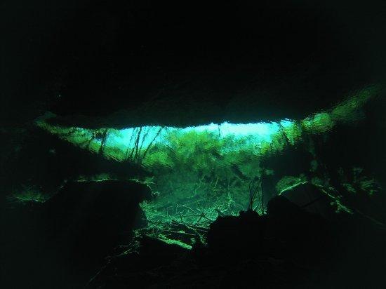 Pro Dive International: Cenotes 1