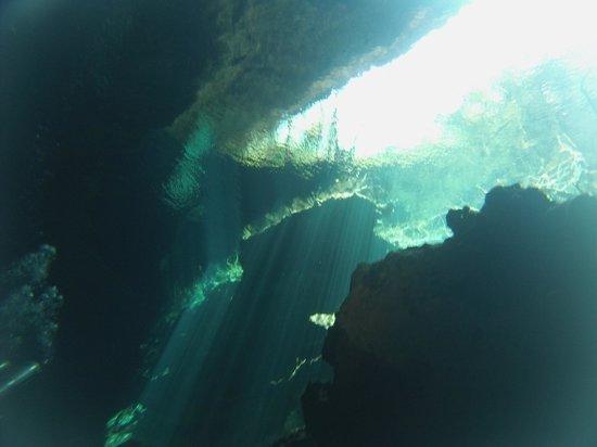 Pro Dive International: Cenotes 2
